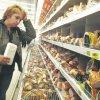 ВТО: всероссийский торговый облом?